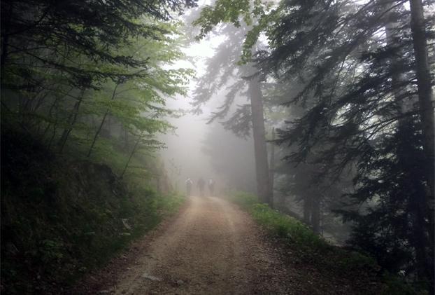 Vandring i tågen